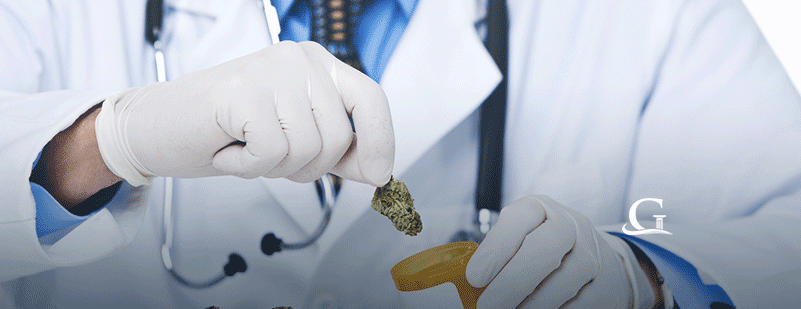 Doctor Handling Medical Marijuana Stock Photo