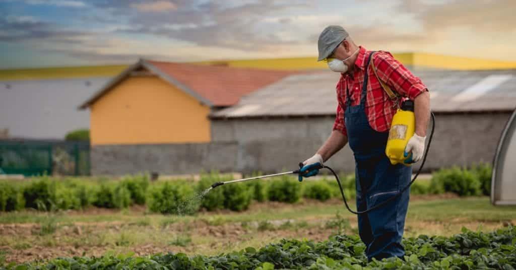 Farmer Spraying Roundup On Crops Stock Photo